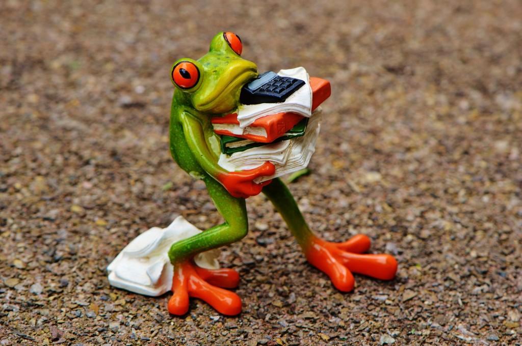 frog-1339892_1920